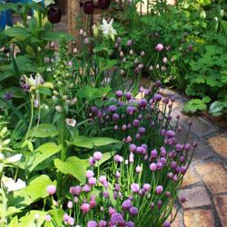 garten und landschaftsbau k sterarend. Black Bedroom Furniture Sets. Home Design Ideas
